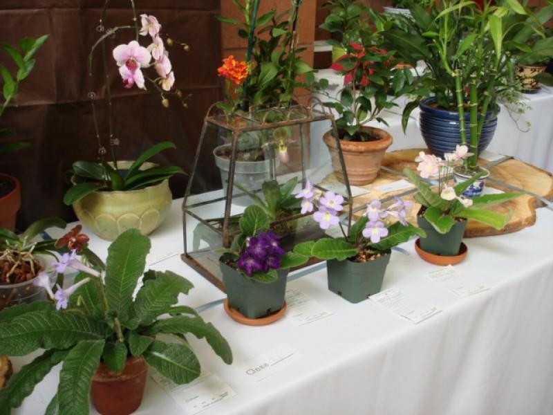 Garden Club of Cranford Tag Sale