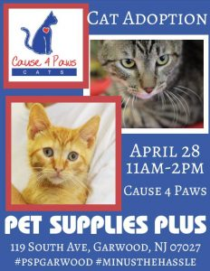 Cat Adoption Event - Meet your new Furever Friend! @ Pet Supplies Plus | Garwood | New Jersey | United States