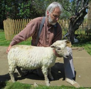 SHEEP TO SHAWL FESTIVAL @ Miller-Cory House Museum | Westfield | New Jersey | United States