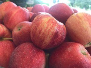 Applefest! @ Dreyer Farms | Cranford | New Jersey | United States