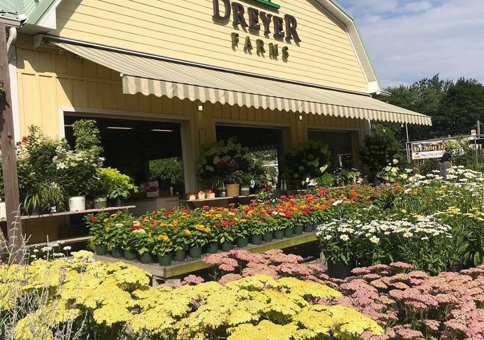 Dreyer Farms Spring Re-Opening
