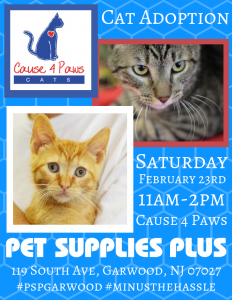 Cause 4 Paws Cat Adoption @ Pet Supplies Plus - Garwood NJ | Garwood | New Jersey | United States
