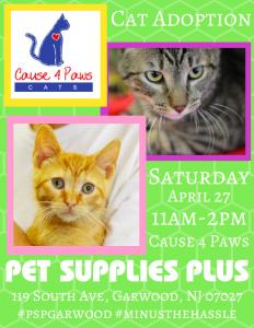 Cause 4 Paws Cat Adoption @ Pet Supplies Plus - Garwood NJ | Garwood | New Jersey | United States