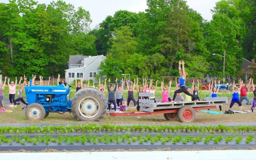Farm Yoga Event: A Yoga Practice in the Fields at Dreyer Farms