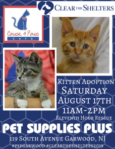 Clear the Shelters Day 2019 Kitten Adoption @ Pet Supplies Plus | Garwood | New Jersey | United States