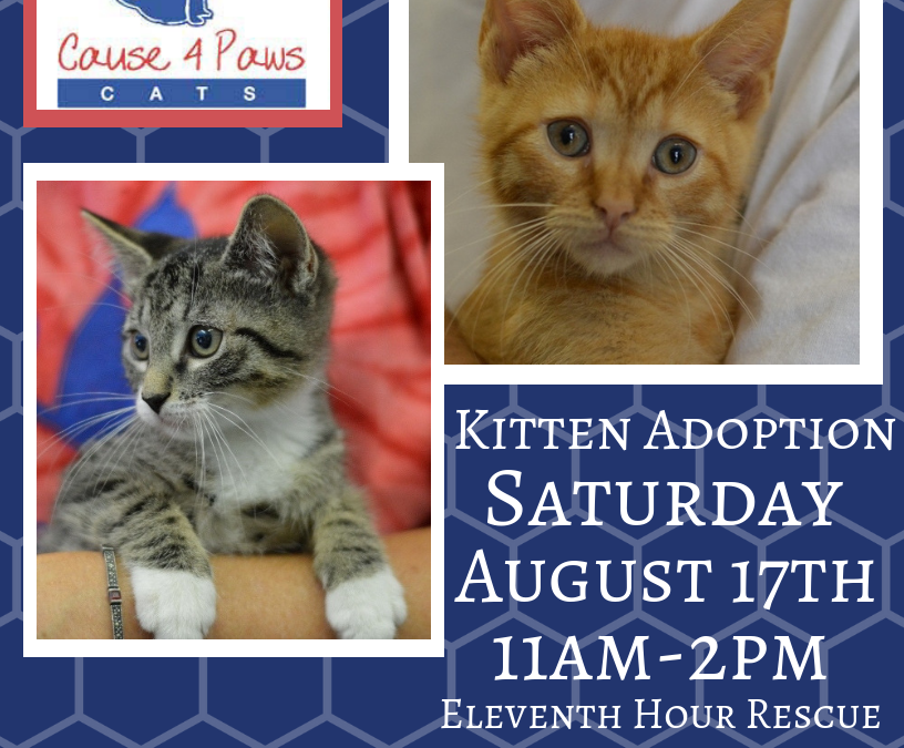 Clear the Shelters Day 2019 Kitten Adoption