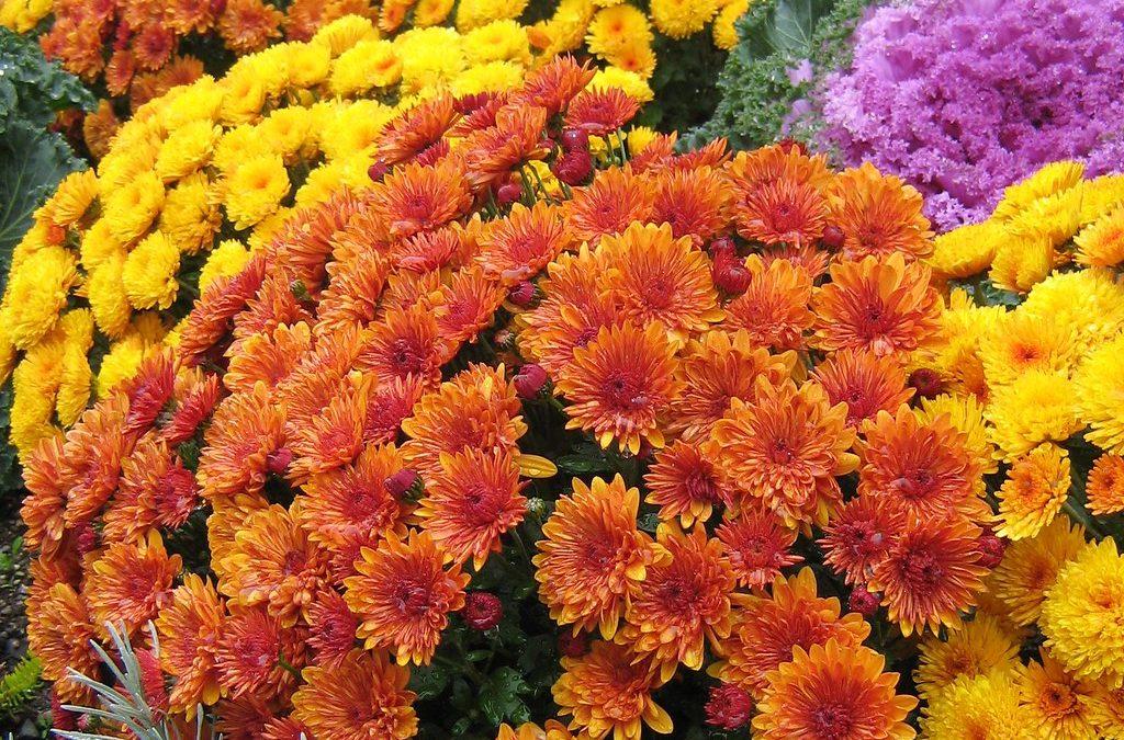 Saint Michael's Youth Ministry Program Fall Flower Sale