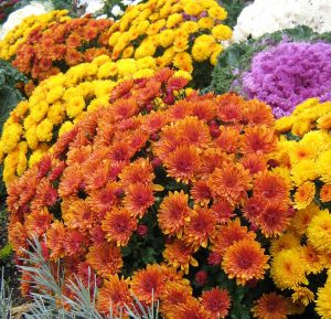 Saint Michael's Youth Ministry Program Fall Flower Sale @ St. Michael's School | Cranford | New Jersey | United States