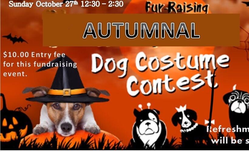 Autumnal Dog Costume Contest