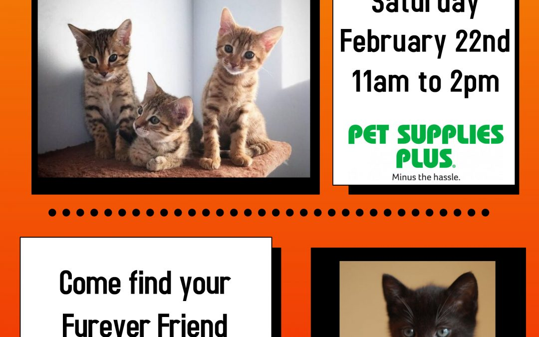 Cause 4 Paws Cat Adoption