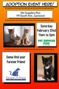 Cause 4 Paws Cat Adoption @ Pet Supplies Plus | Garwood | New Jersey | United States