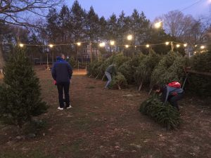 Westfield Area Y Men's Club Tree Lot Opens Saturday, November 28 @ Elm Street Field